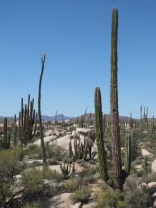 desert-1005654_1920